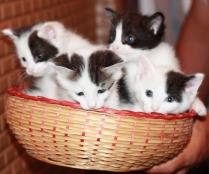 four kitties