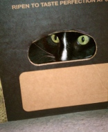 This is what happens when you send your cat to the NSA for litter training.