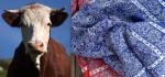 3 Cow:Kerchief